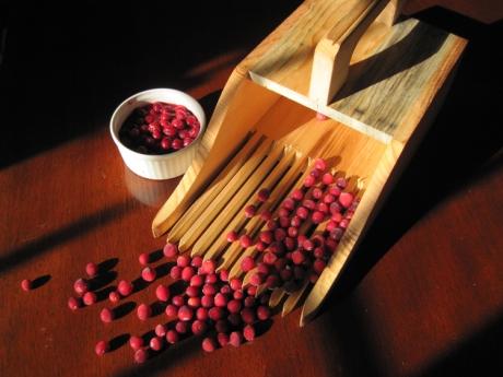 Wild Cranberries and Picker